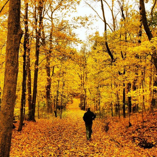 October Trails by Julianne Drew