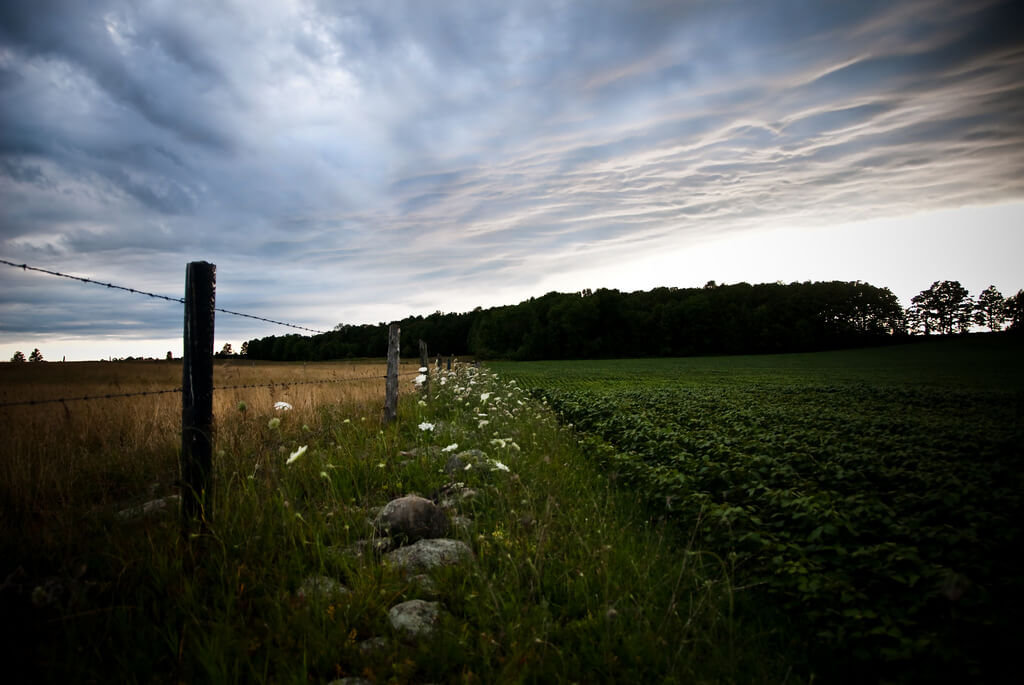 Farm Living by Lacie Meier
