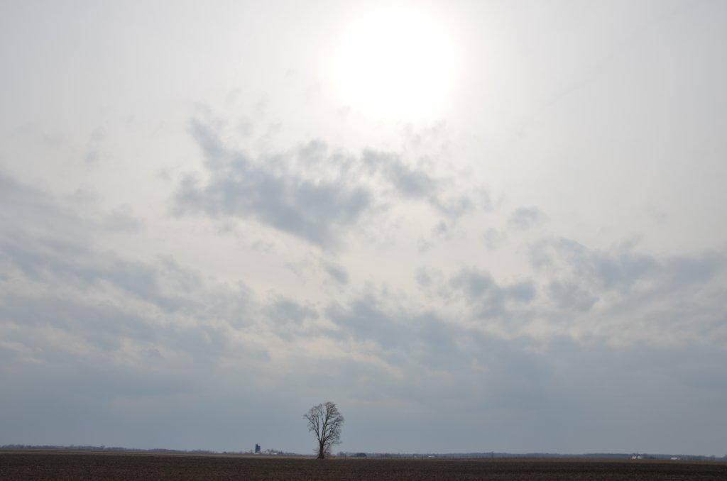 Lone Prairie by David Thompson