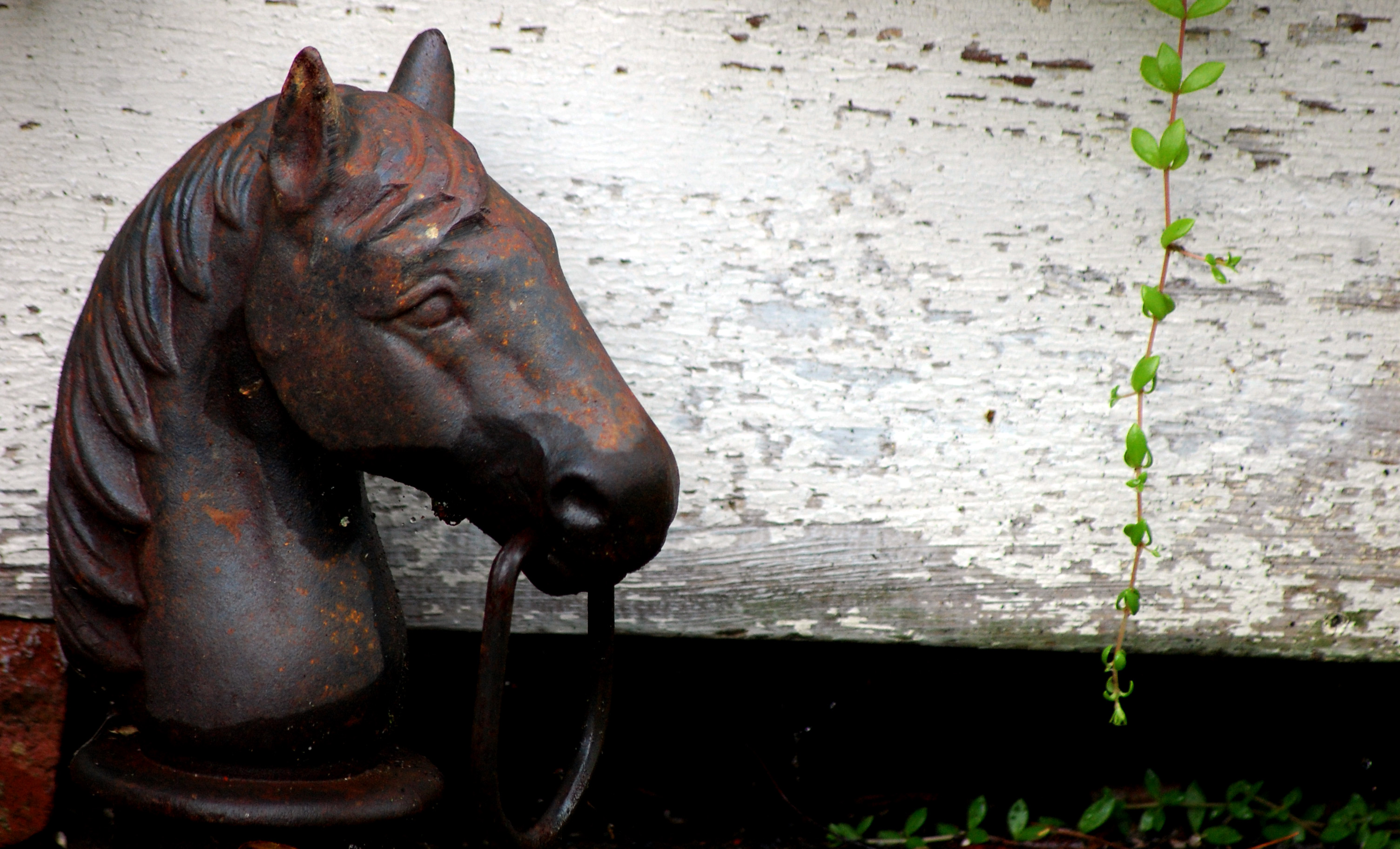 """Horse Hitch"" (c) Dawn Eves"