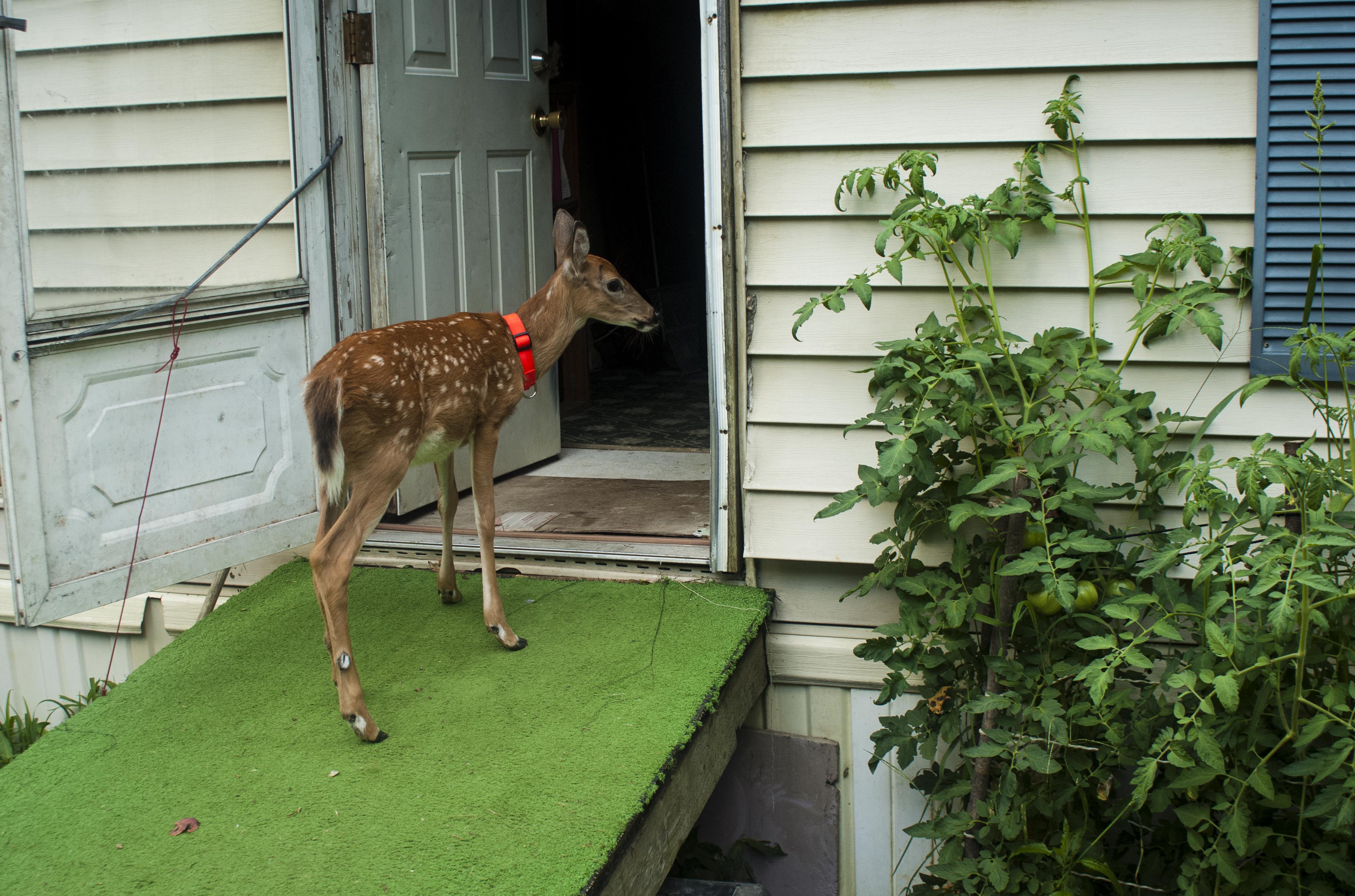 """""""Steve's Back Door"""" (c) Rachel Hartley-Smith"""