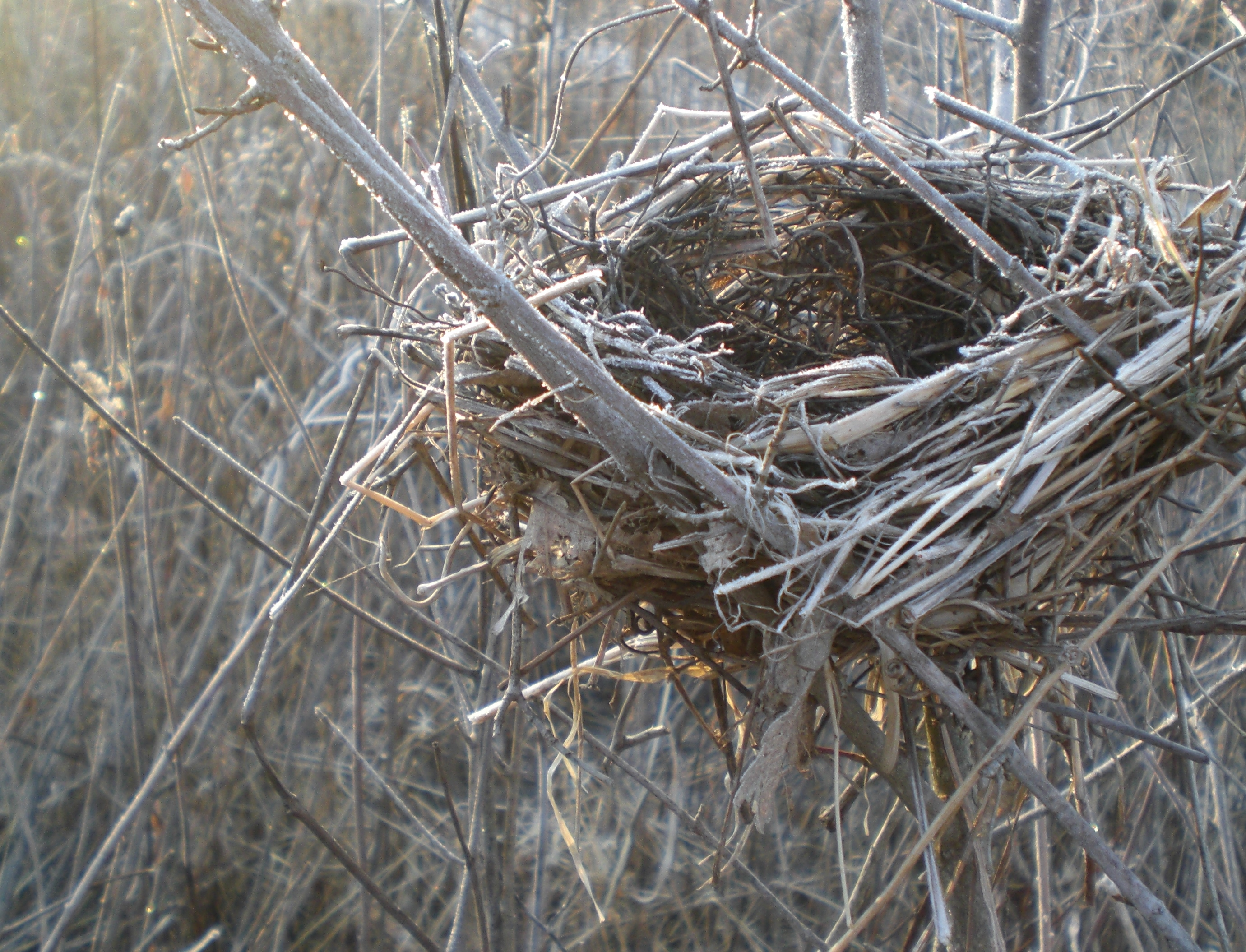 """Empty Nest"" (c) Lucas Shepherd"